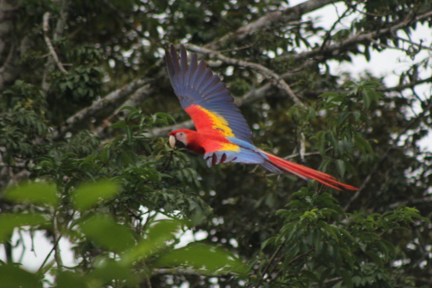 TOUR TO LAS NUBES & GUACAMAYAS  2 DAYS